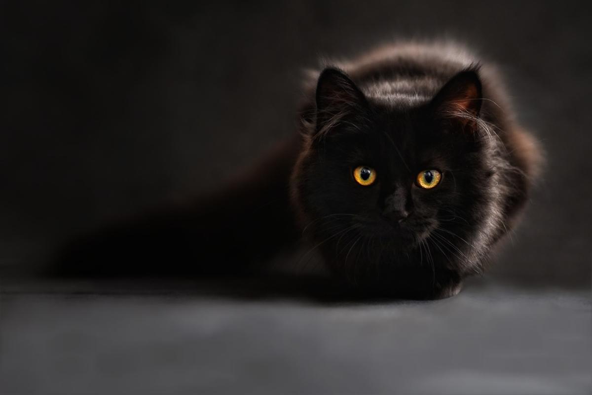 Povery, čierna mačka