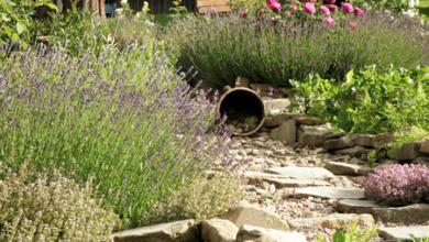Photo of Funkčná bylinková záhrada sa rodí v zime