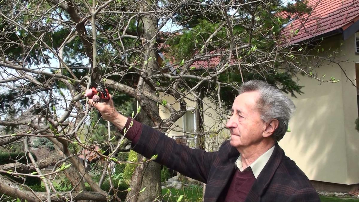 Strihanie ovocných stromov