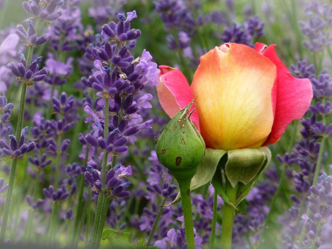 záhradné kompozície