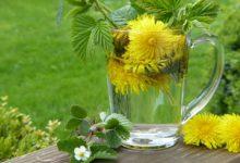 Photo of Staňte sa rodinným lekárom za pomoci liečivých rastlín